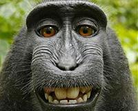 thumb_monkey